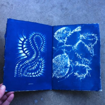 example page of conjugate : cyanotype zine by Véra Ada and Daniel Headland